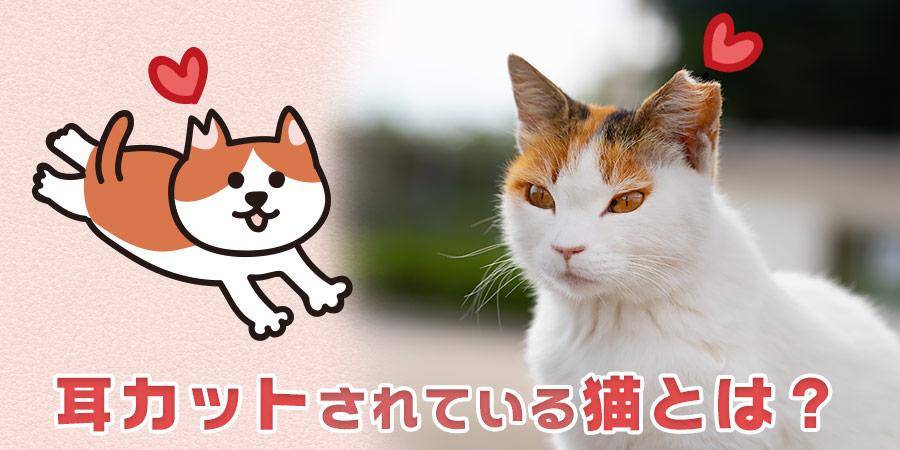 耳カットされている猫とは?