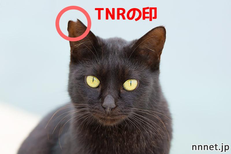 耳カットされた猫