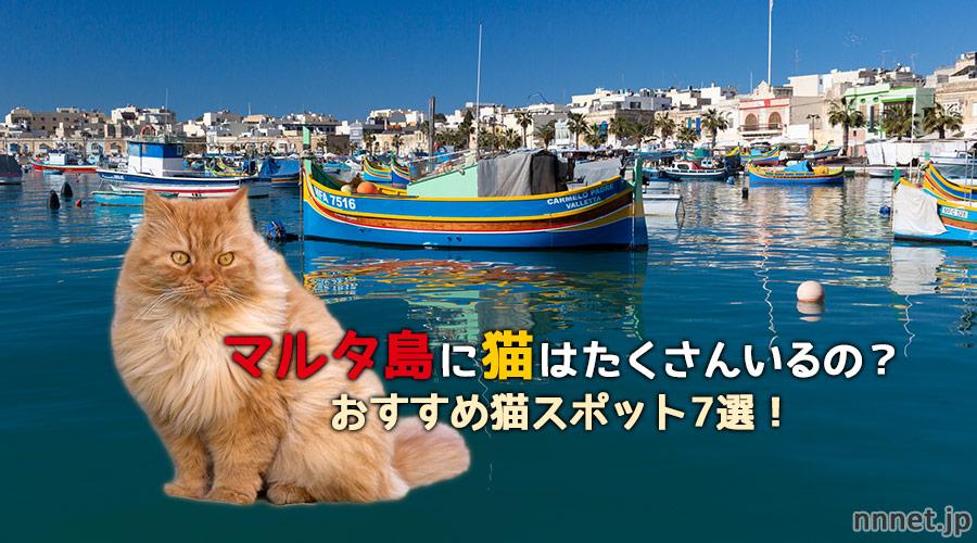 マルタ島の猫スポット
