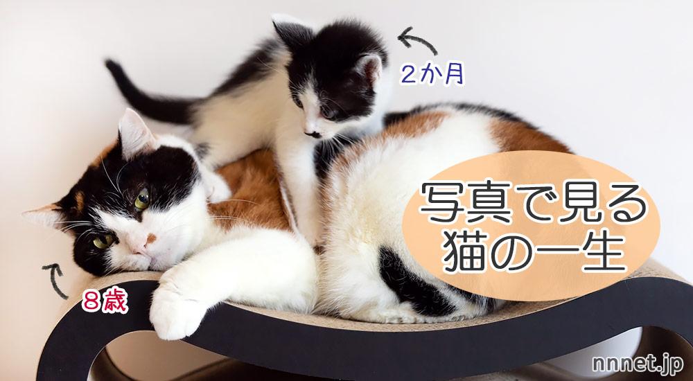 【写真で見る】猫の一生とお世話の仕方
