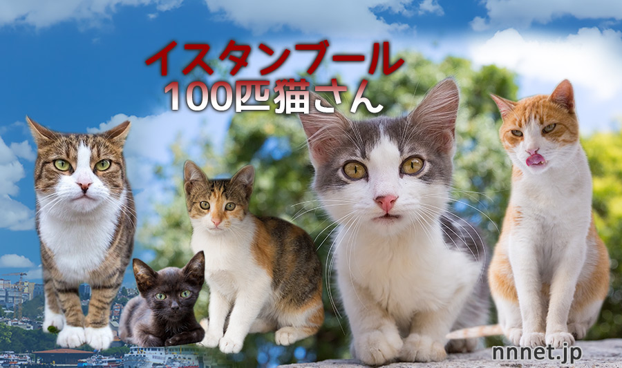 トルコ・イスタンブールの100匹猫