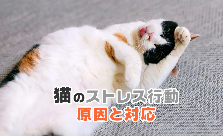 猫のストレス行動・原因と対応について