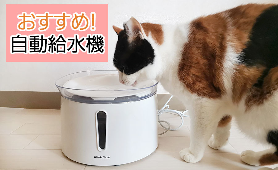 重度の腎不全の猫・みけみけが水をよく飲むようになった自動給水機