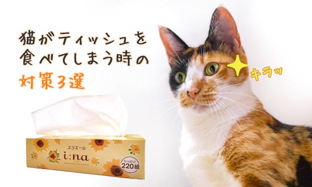 猫がティッシュを食べてしまう時の対策3選